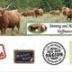 Highland Cattle Direktvermarkter