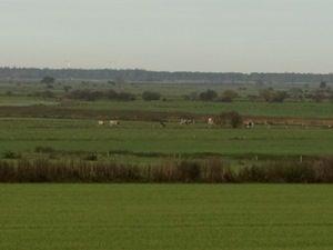 Naturschutz durch Rinderzucht